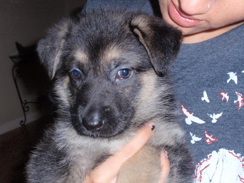 Puppy! 013