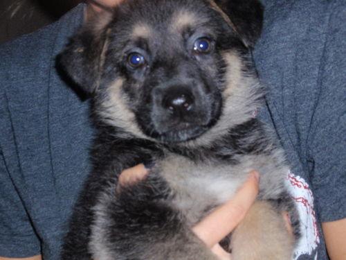 Puppy! 012